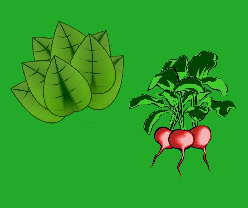 rosliny towarzyszace