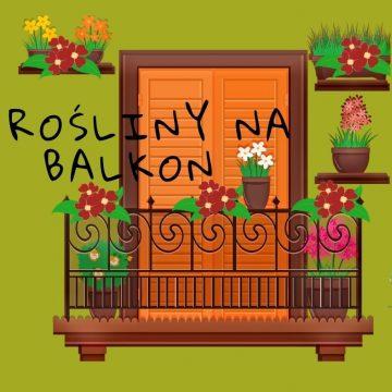 Jakie rośliny posadzić na balkonie?