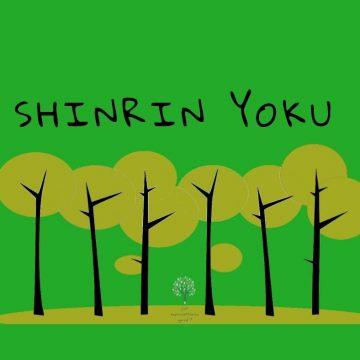 Shinrin Yoku – poczuj atmosferę lasu