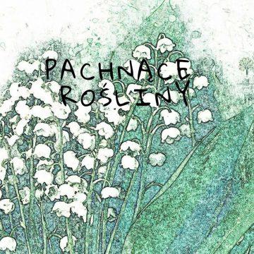 16 pachnących roślin do twojego ogrodu