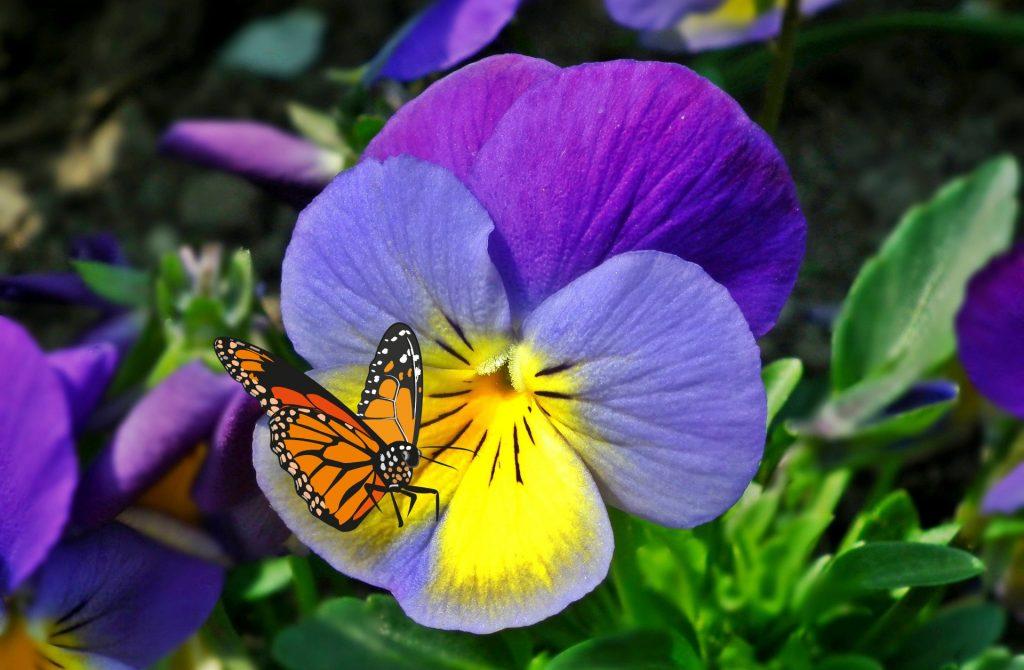 kwiat wiosennych motyli