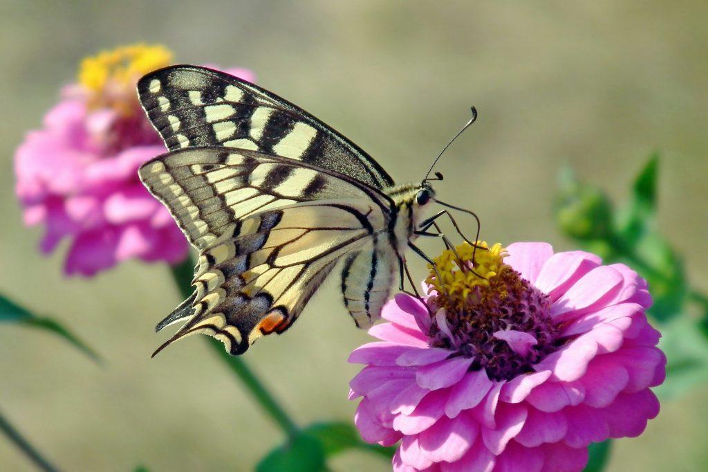roślina odwiedzana przez motyle