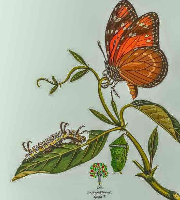 przeobrażenie motyla