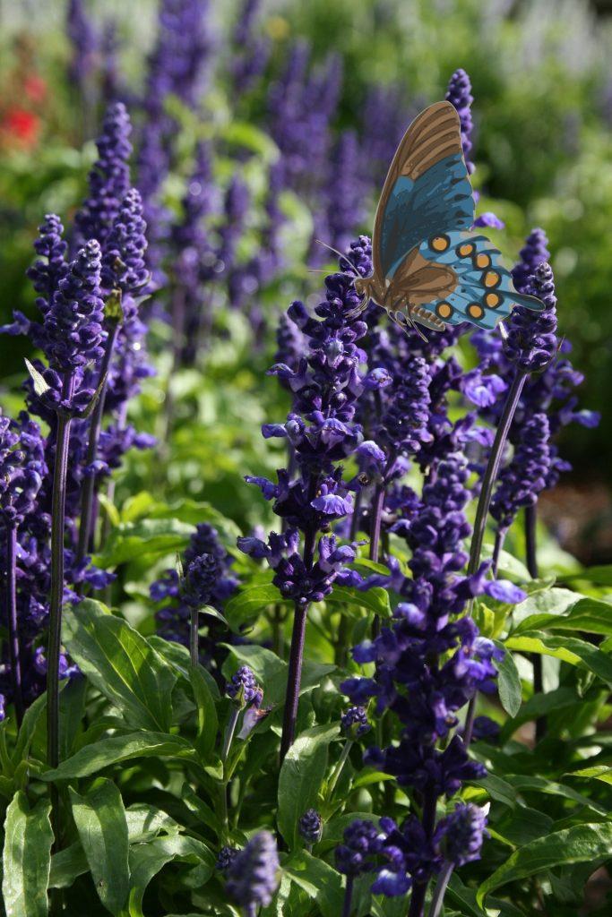 roślina motyli
